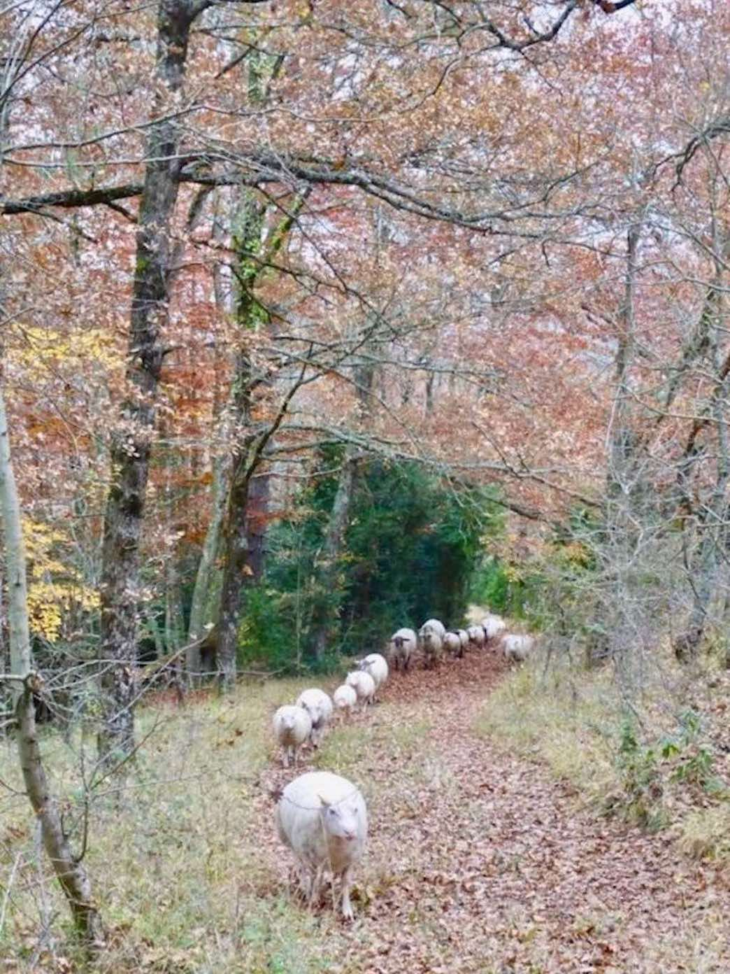 Moutons-12