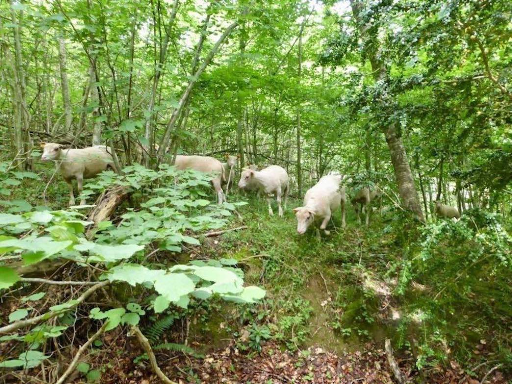Moutons-7